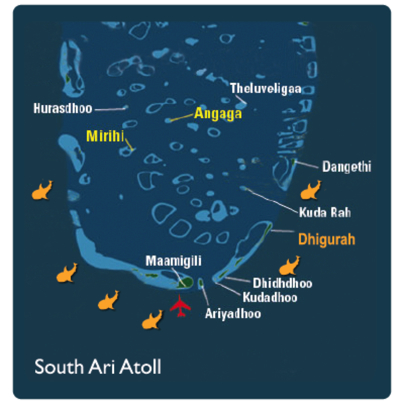 Boutique Beach Maldives Map showing Whaleshark Location Sighting Markers